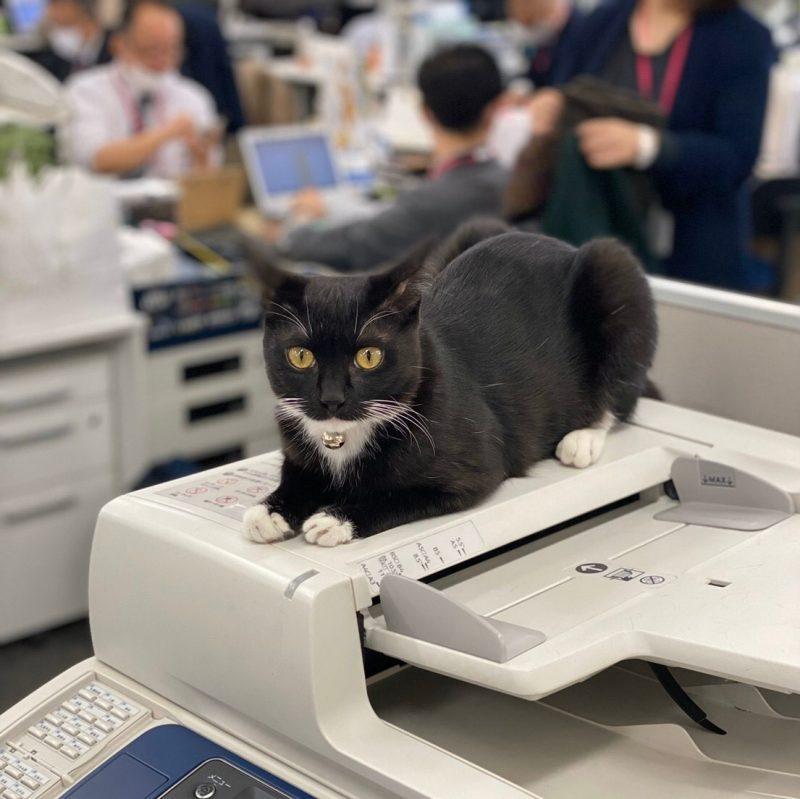【イオン×豊かな暮らし】オフィスでは社員ペットが活躍中。イオンペット株式会社